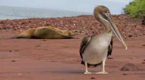 Red Beach, RABIDA ISLAND - The Galapagos Islands