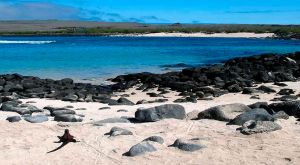 Osborn Islet, ESPAÑOLA ISLAND - The Galapagos Islands