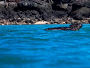 Playa Negra, MARCHENA ISLAND - The Galapagos Islands